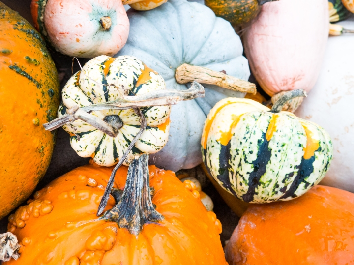 health benefits of pumpkin + 3 easy pumpkin recipes to make this fall!